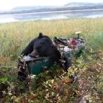 2010 Fall Black Bear Champ