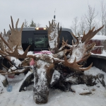 Trophies for Taxidermist