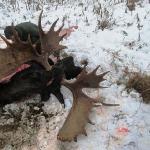 Amazing Moose 2012