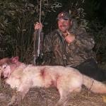 Big Blonde Wolf